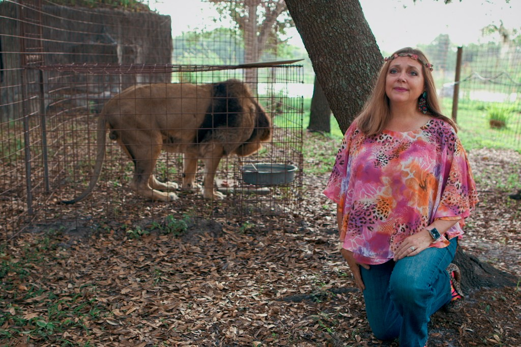 Carole Baskin, right, with flowers in her hair and a caged tiger, left.