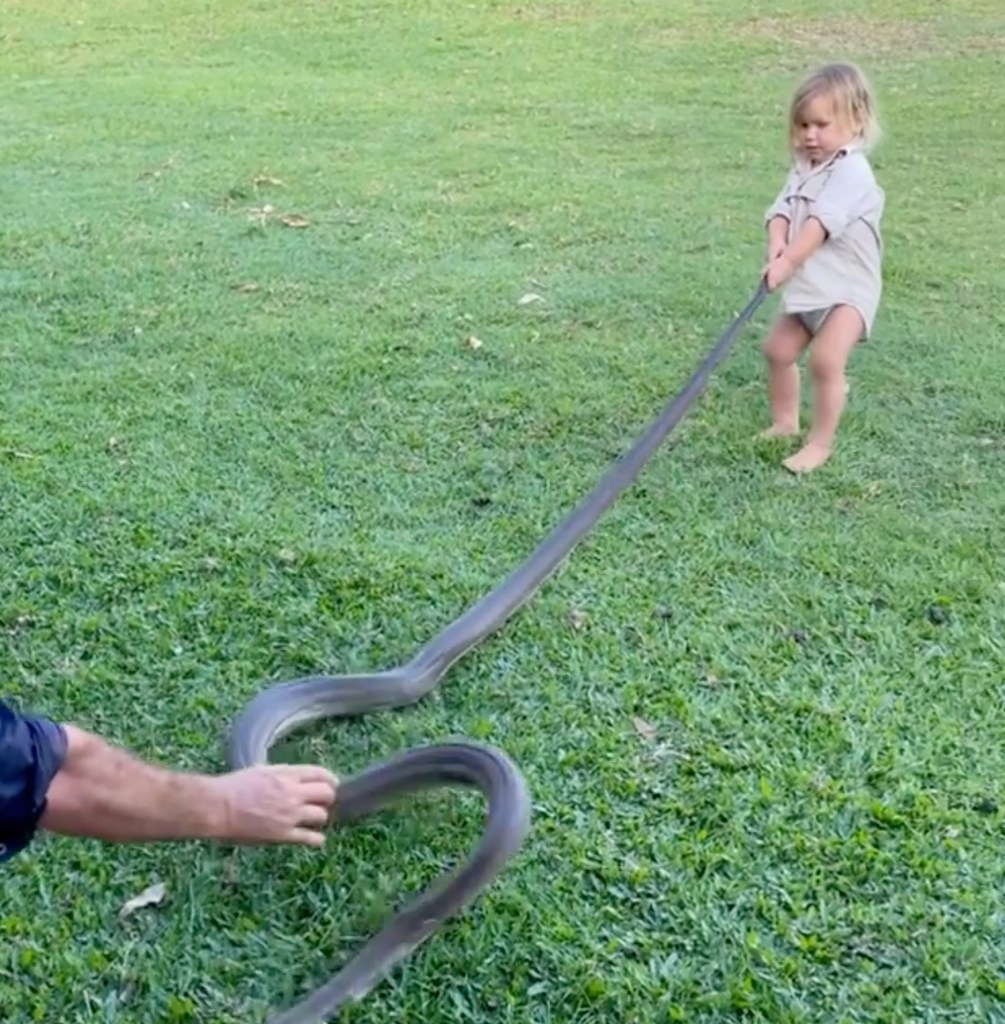 The Instagram clip shows Matt Wright's 2-year-old son Banjo tugging at the tail of an Olive python.