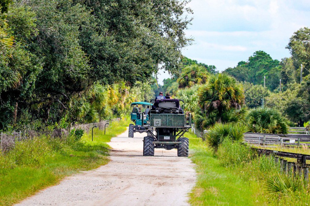 Law enforcement drive swamp buggies down a dirt road on the Southside of the Carlton Reserve, as they search for any signs of Brian Laundrie.