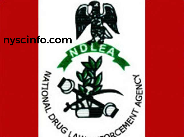 Apply for NDLEA Federal Government Recruitment 2019
