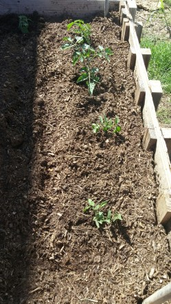 Once the garden bed was ready
