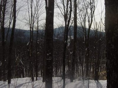 View from the summit of Harvey Mountain NY.