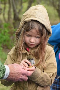 First Grand Student and Great-Crested Flycatcher, photo by Tom Barber, c 2015