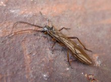 Stonefly, favorite prey of brook trout, gailhampshire on flickr.com, https://www.flickr.com/photos/gails_pictures/22698433814. No changes were made