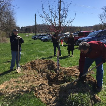 Warwick Town Supervisor Sweeton and Councilman Kowal planting a redbud tree.