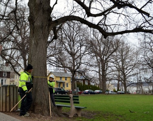 Nyack's Tree Inventory began in the Village's Memorial Park
