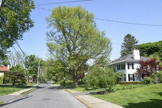 sycracuse-tree