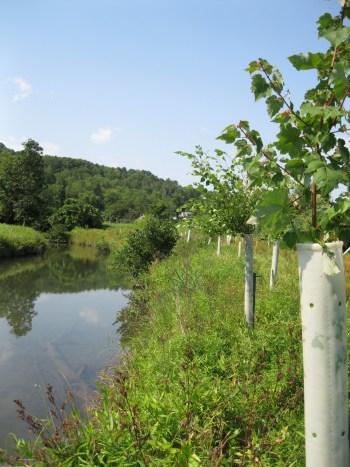 planting-trees-next-to-streams