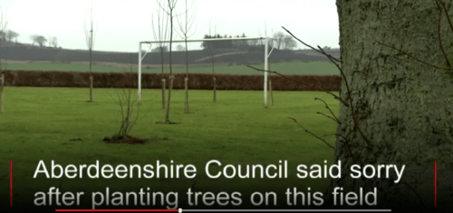 council trees ii