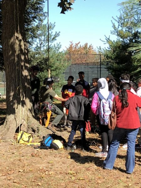 learning about tree climbing