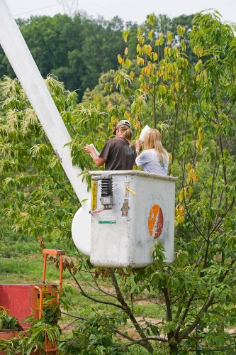 09-Controlled-chestnut-pollination-Meadowview-Research-Farms-VA