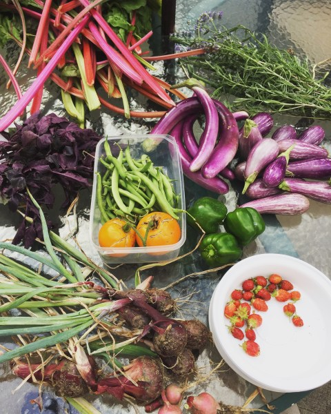 Astoria garden bounty iii