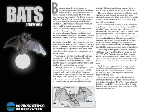 habitats for bats 2019 fifth grade arbor day poster contest new