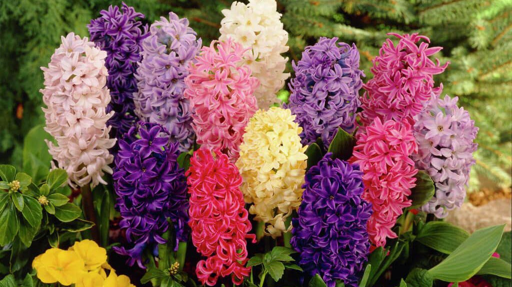 Virágba boruló tavasz