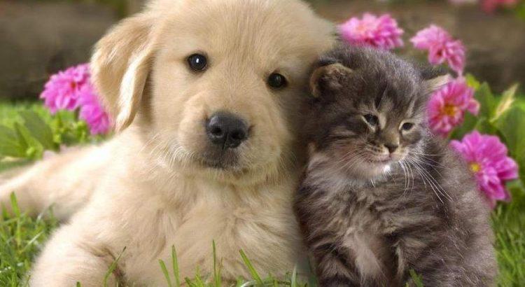 terápiás-állatok élnek
