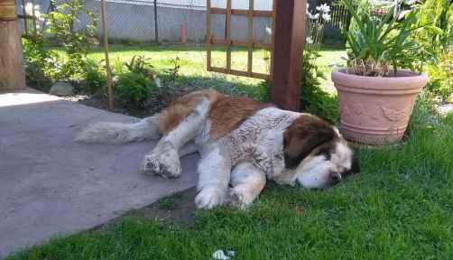Kutya van a kertben