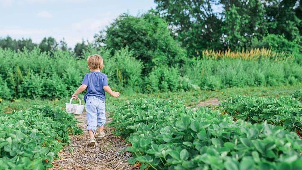 A gyerekek számára is kell egy kiskert!