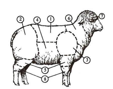 birkahúst