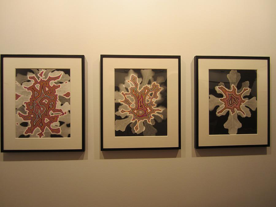 Fred Tomaselli's flower blooms are currently on view at Planthouse Gallery as part of