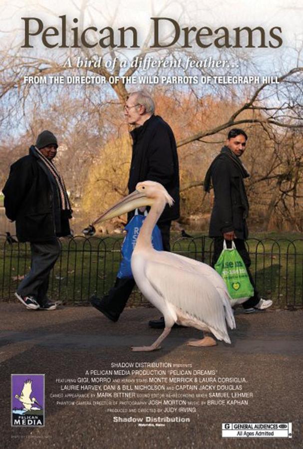 Pelican documentary soars