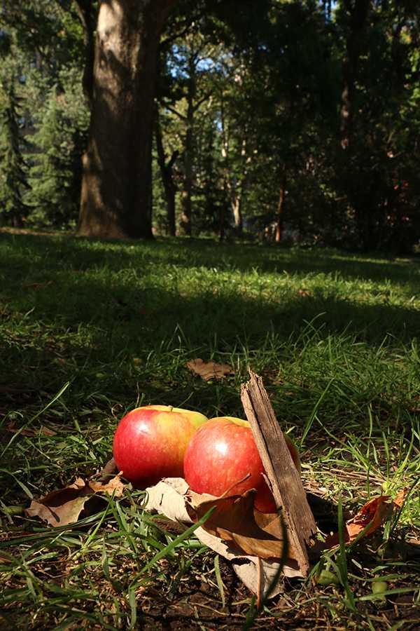 Apple Picking is a perfect fall weekend adventure
