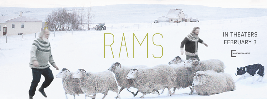 %22Rams%22+is+a+new+Icelandic+film+directed+by+Gr%C3%ADmur+H%C3%A1konarson+which+tells+a+captivating+story+between+men+and+sheep.