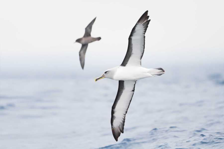 A dozen albatrosses were slaughtered and photographed dead in Kaena Point Natural Area Reserve in 2015. Tisch sophomore Christian Gutierrez has been charged with the crime along with two others, who are minors.