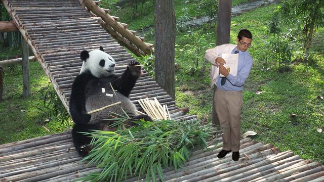 pandapremed