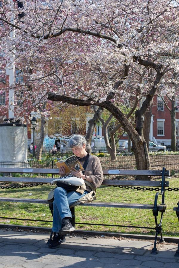 A+woman+reads+a+book+under+a+cherry+blossom+tree+in+Washington+Square+Park.+