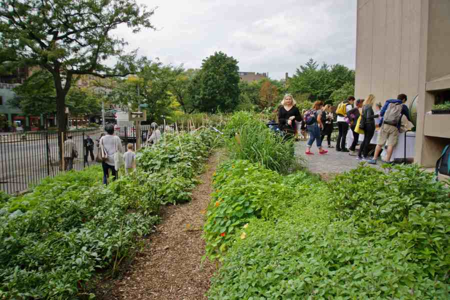 As an urban green space used for agriculture, the NYU Urban Farm Lab is an example of foodscaping at NYU. (Alana Beyer)