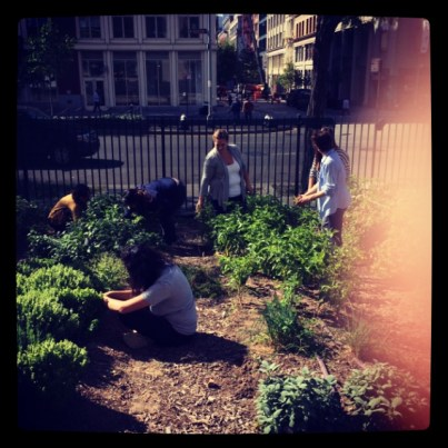 Urban agriculture students do a little pre-party weeding.
