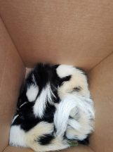 June 22nd: Yes, more baby skunks. Good thing we love the little guys!