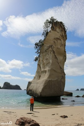 This giant rock was standing alone on the Cathedral Cove beach--one of many rocks on this eroding coastline of the Coromandel Peninsula