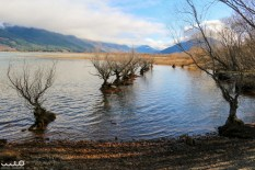 Gnarly trees on the banks of Lake Wakatipu/Glenorchy Lagooon in Glenorchy.