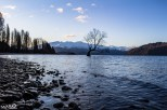 """That Wanaka Tree""; the famous Wanaka willow tree in Lake Wanaka"