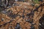 Even the dead ferns were pretty, providing a golden carpet on the rainforest floor.