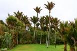 Palm trees in Punakaiki