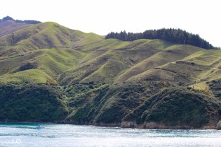 A small boat sails in Queen Charlotte Sound