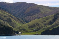 Old whaling villages and huts--and many more sheep pastures--spotted the land at the end of Queen Charlotte Sound.