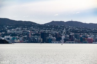 Our first views of the city of Wellington, New Zealand. Here is downtown.