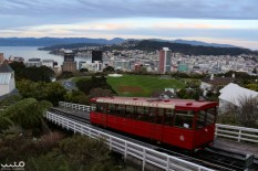 Since our ferry had been delayed by 2 hours, we didn't have as much time in downtown Wellington as we had planned, but we still made time to go up to the Wellington Botanic Gardens on the famous Wellington Cable Car. The top of the hill provides one of the best and most-known views of downtown Wellington.
