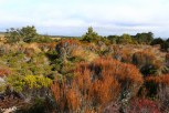 The fiery vegetation fits the volcanic landscape of Tongariro National Park.