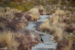 The paths in Tongariro National Park (at least this one) was well-maintained and picturesque.