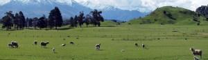 9/29ワナカの子羊牧場