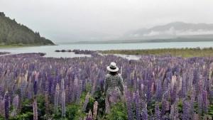12月6日テカポ雨の中のルピナス湖畔