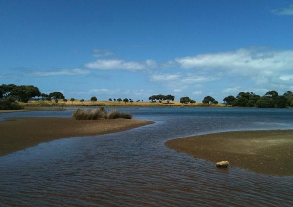 tawharanui lagoon 2