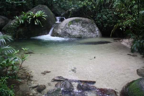 mossman gorge rainforest walk creek
