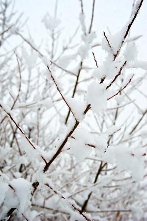 Snow_2012-06-06_14-01-02__DSC1292_©RichardLaing(2012)