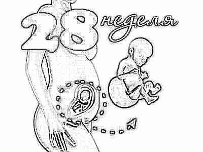 Развитие плода на 28 неделе беременности (12 фото): вес и ...