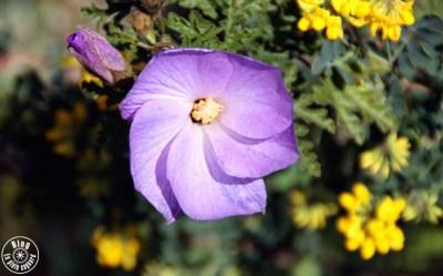 jardin saint-bernard hyères 7